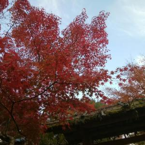 2020'コーデ38 紅葉の松島*