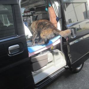 車泊旅に行けると思ったのに「残念でした」