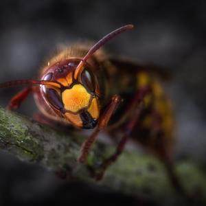 スズメバチが襲ってくる理由や対処方法は?