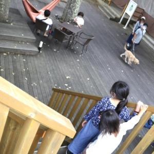 富士マリオットホテル山中湖に泊まる⑨ 〜ハンモックカフェから渋滞へ〜