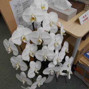 教室に華が咲きました