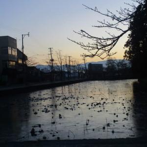 冬の蓮の花池