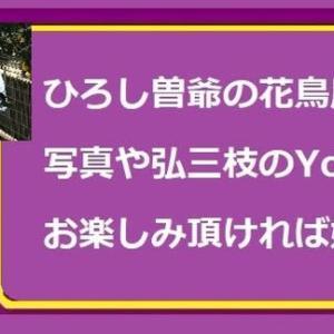 2019・11・15・ひろし曽爺のミニ旅~広島護国神社七五三参り
