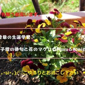 2020・06・24・もみじファミリーパーク遊歩道~正岡子規の俳句と花のマクロ🌺Photoコラボをご覧下さい!