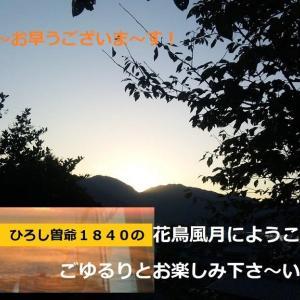 2020・07・08 ・📚生涯学習>🌺尾那岡団地と丸石地区で見かけた花達!