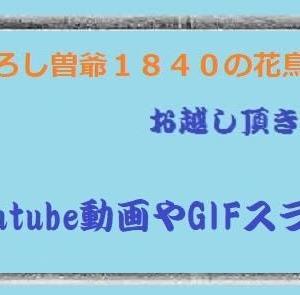 ブラ散歩~🚙国道2号線丸石~垣の浦①・旧山陽道・四十八坂を花さんぽ②!