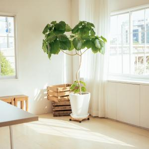 SALE  観葉植物 SUMMER SALE 工房蘭華