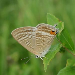 初秋の野原で出合った蝶たち