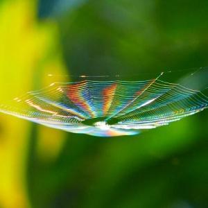秋の陽を受け虹色に輝く!蜘蛛の糸