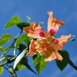 秋の大船フラワーセンター⑤温室の花