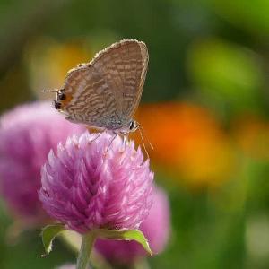 陽だまりの花壇に集まる蝶たち