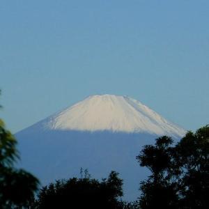 秋晴れもと令和初冠雪の富士