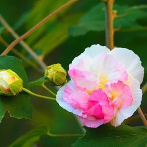 霜月の庭に咲く花