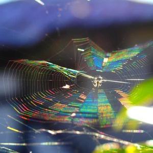 朝日に輝く虹色の蜘蛛の糸