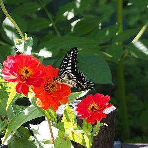 蝶や虫たちとも別れの季節