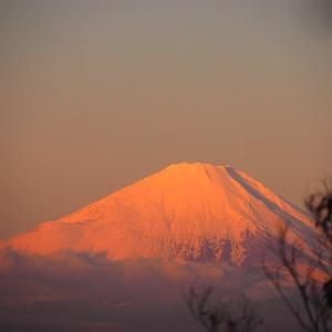 紅葉越しに観る富士