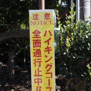 鶴岡八幡宮~源平池の水鳥