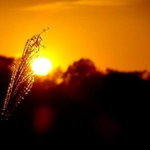 師走の空に沈む夕陽と夕焼け富士