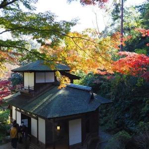 横浜三溪園~聴秋閣の紅葉