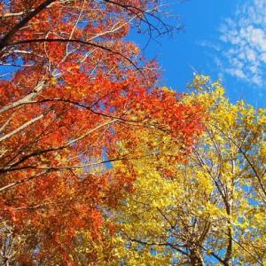 舞岡公園~青空に映える紅葉