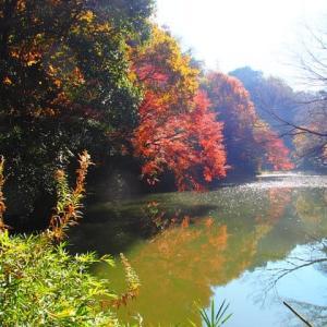 瀬上池の紅葉2019