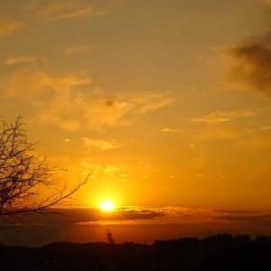 冬木立越しに沈む夕陽と富士