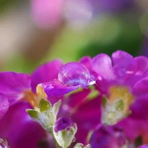 朝日に煌めく水滴