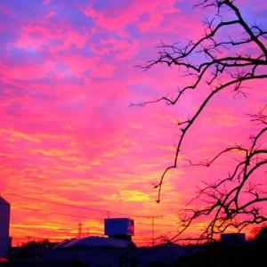 バラ色に染まる朝焼けの空と雲