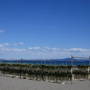 三浦海岸~浜辺の大根干しの風景