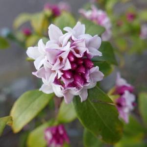春浅い早春の花探し散歩