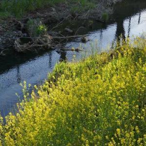 春分~春の小川の風景