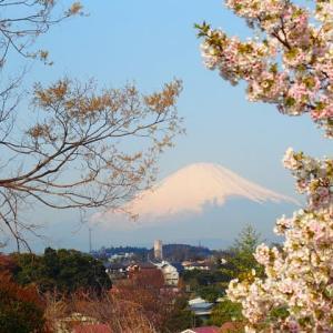 桜と富士の風景2