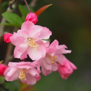 庭の花に癒されて・・