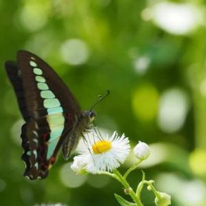 stay my Gardenで蝶や虫たちと遊ぶ