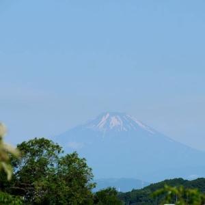 五月晴れの朝、富士見散歩