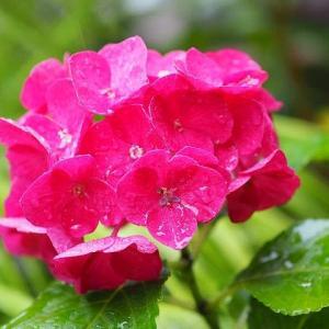 やっぱり雨降り!今日は雨の特異日