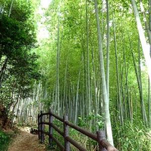涼風が吹き抜ける竹林の道