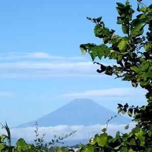 朝散歩で観る夏の富士
