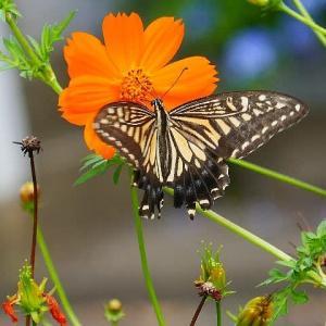 公園の花壇で蝶たちと遊ぶ