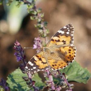 写ん歩で出遭った蝶たち