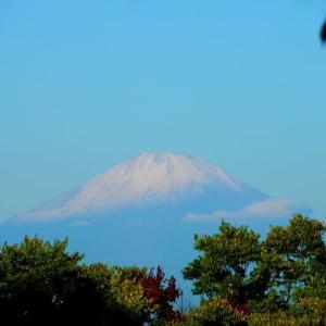 秋晴れの朝散歩で観る初冠雪の富士