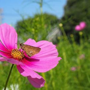秋の花壇で蝶たちと遊ぶ