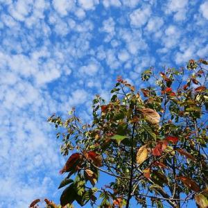 秋の空~いわし雲・うろこ雲等