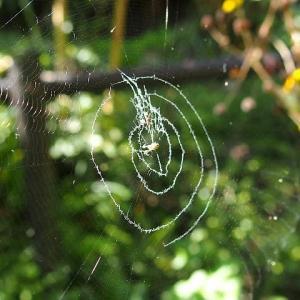 面白い形の蜘蛛の巣