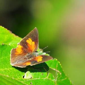 写ん歩で見かけた陽だまりの蝶たち
