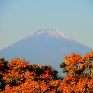 朝散歩で紅葉越しに観る富士