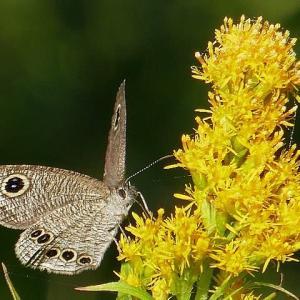 小春日和~日向ぼっこの蝶や虫たち