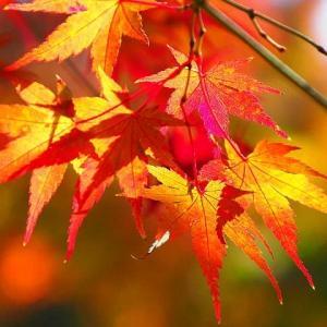 舞岡公園の紅葉散歩