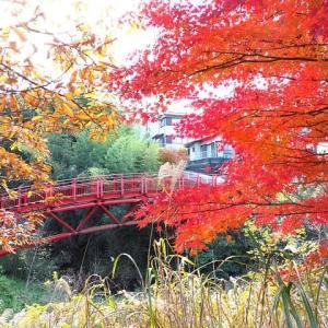 名残の紅葉散歩②いたち川