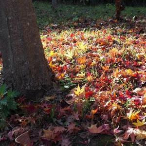 散りゆく紅葉~落ち葉のささやき